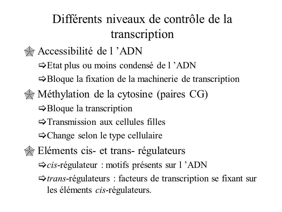 Différents niveaux de contrôle de la transcription  Accessibilité de l 'ADN  Etat plus ou moins condensé de l 'ADN  Bloque la fixation de la machin
