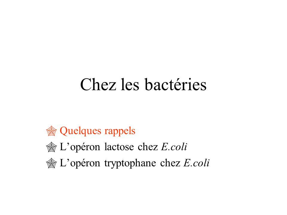 Chez les bactéries  Quelques rappels  L'opéron lactose chez E.coli  L'opéron tryptophane chez E.coli