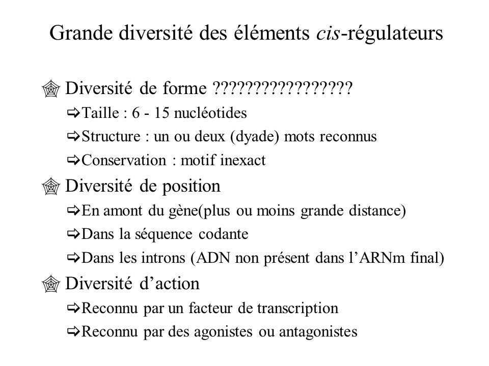 Grande diversité des éléments cis-régulateurs  Diversité de forme ?????????????????  Taille : 6 - 15 nucléotides  Structure : un ou deux (dyade) mo