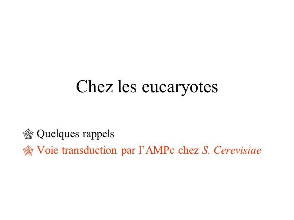 Chez les eucaryotes  Quelques rappels  Voie transduction par l'AMPc chez S. Cerevisiae