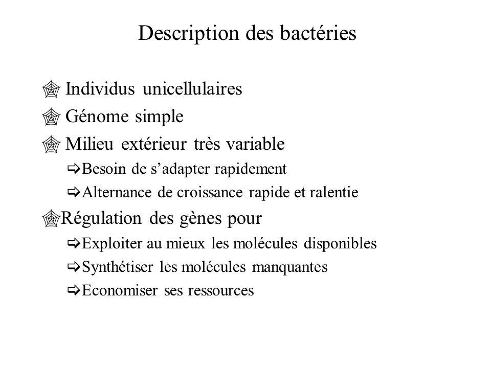 Description des bactéries  Individus unicellulaires  Génome simple  Milieu extérieur très variable  Besoin de s'adapter rapidement  Alternance de