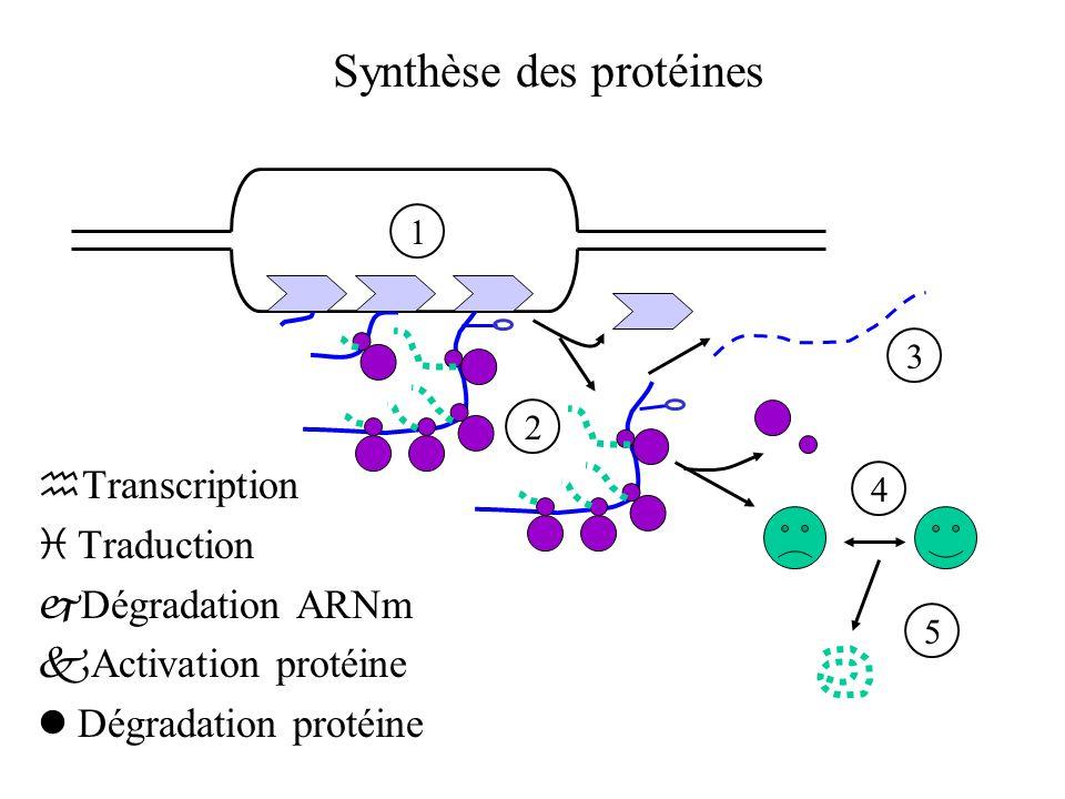 Structure d'un opéron simple TraductionTranscription ARNm CDS Promoteur +1 Terminateur Opérateur CDS RBS ADN protéines  Opérateur : contrôle de la transcription  Promoteur : fixation de l'ARN polymérase  +1 : début de la transcription  RBS : fixation du ribosome  CDS : séquence codant pour une protéine  Terminateur : fin de la transcription