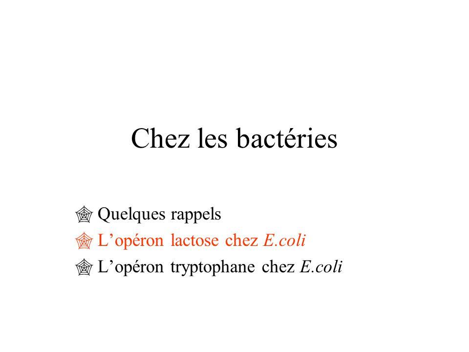 Chez les eucaryotes  Quelques rappels  Voie transduction par l 'AMPc chez S. Cerevisiae