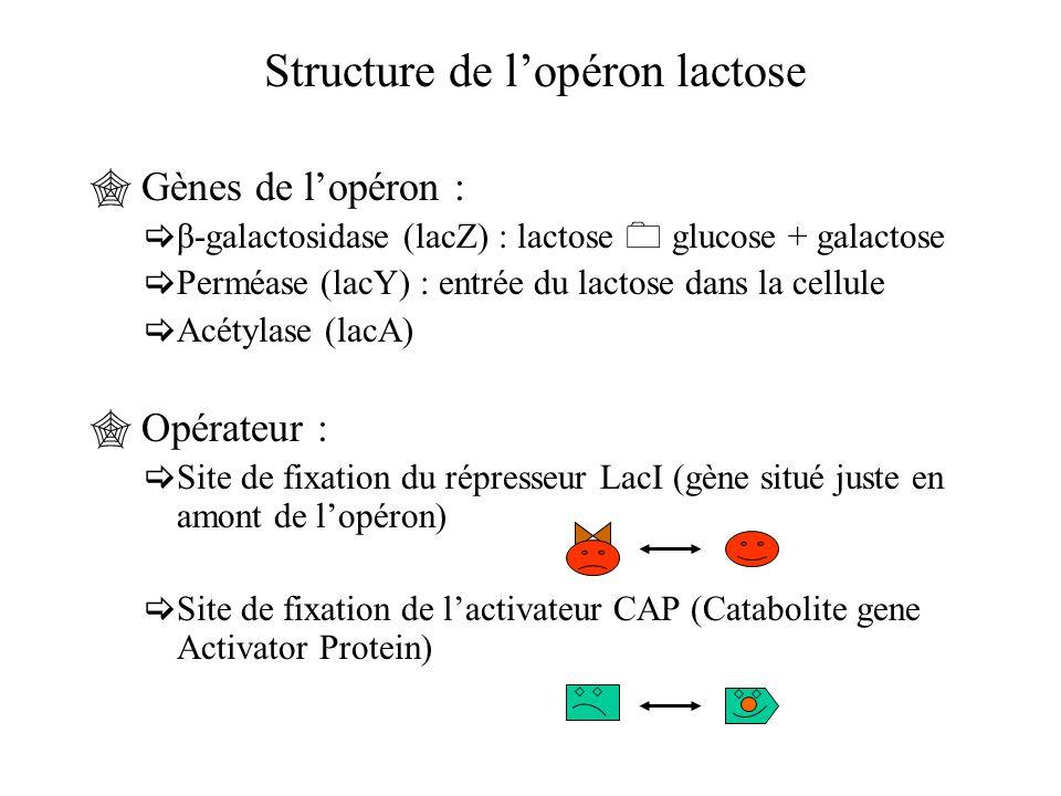  Gènes de l'opéron :  β-galactosidase (lacZ) : lactose  glucose + galactose  Perméase (lacY) : entrée du lactose dans la cellule  Acétylase (lacA