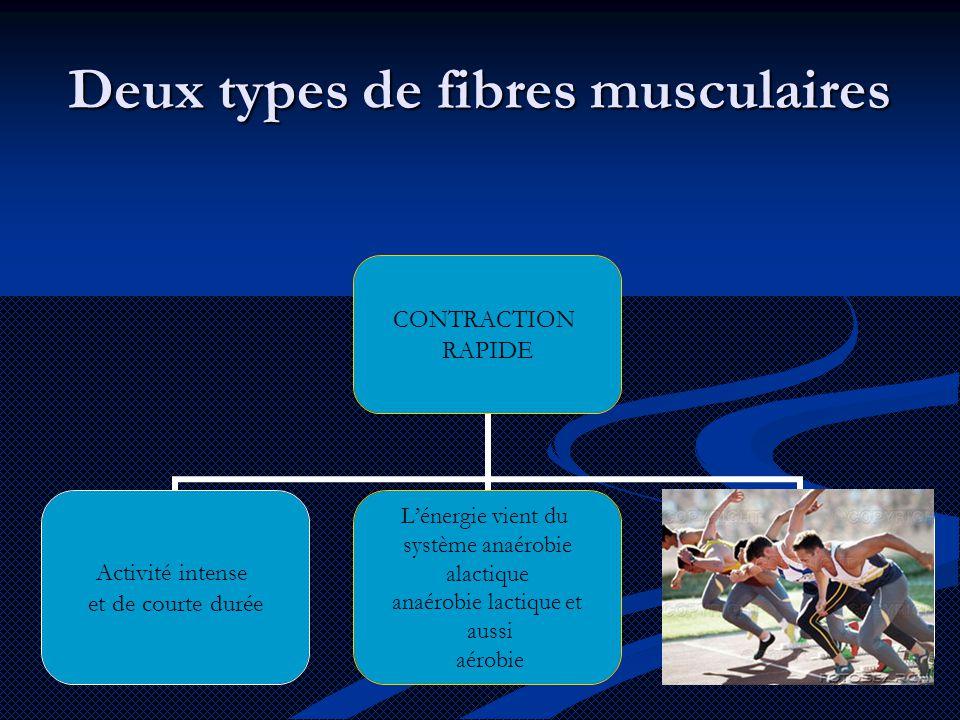 CONTRACTION RAPIDE Activité intense et de courte durée L'énergie vient du système anaérobie alactique anaérobie lactique et aussi aérobie