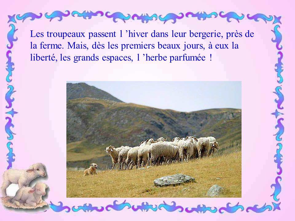 La valeur; le savoir-faire de nos bergers sont mondialement réputés.