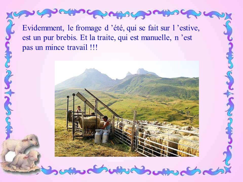 Les brebis nous donnent leurs si doux agneaux - il n 'y a rien à faire, je ne puis pas en manger…- et leur lait. On fait des fromages de lait de brebi