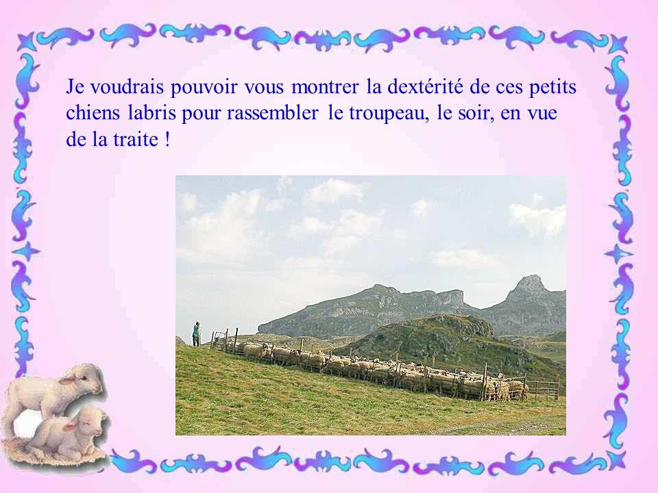 Actuellement, le départ pour la transhumance tend à devenir une fête folklorique, une grande fête où le troupeau est roi.