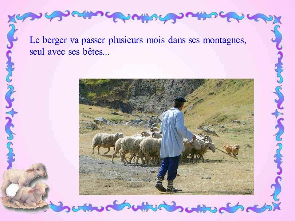 On voit également à nouveau dans nos montagnes le Patou, aussi gros qu'un bélier, chien débonnaire… pour autant que l 'on ne touche pas le troupeau.