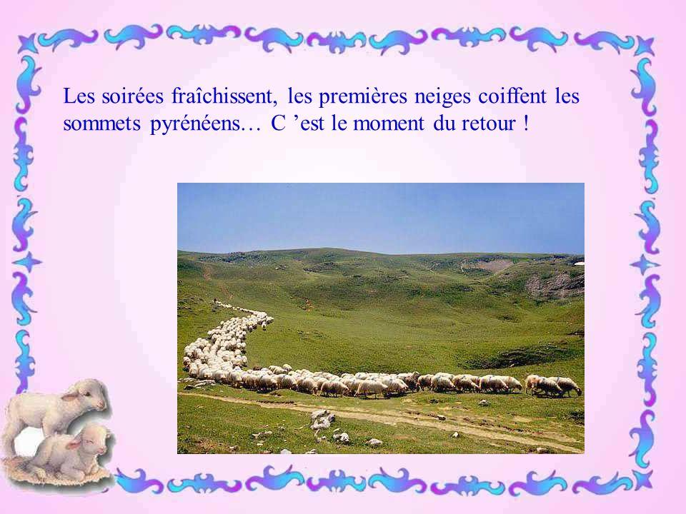 Le berger va passer plusieurs mois dans ses montagnes, seul avec ses bêtes...
