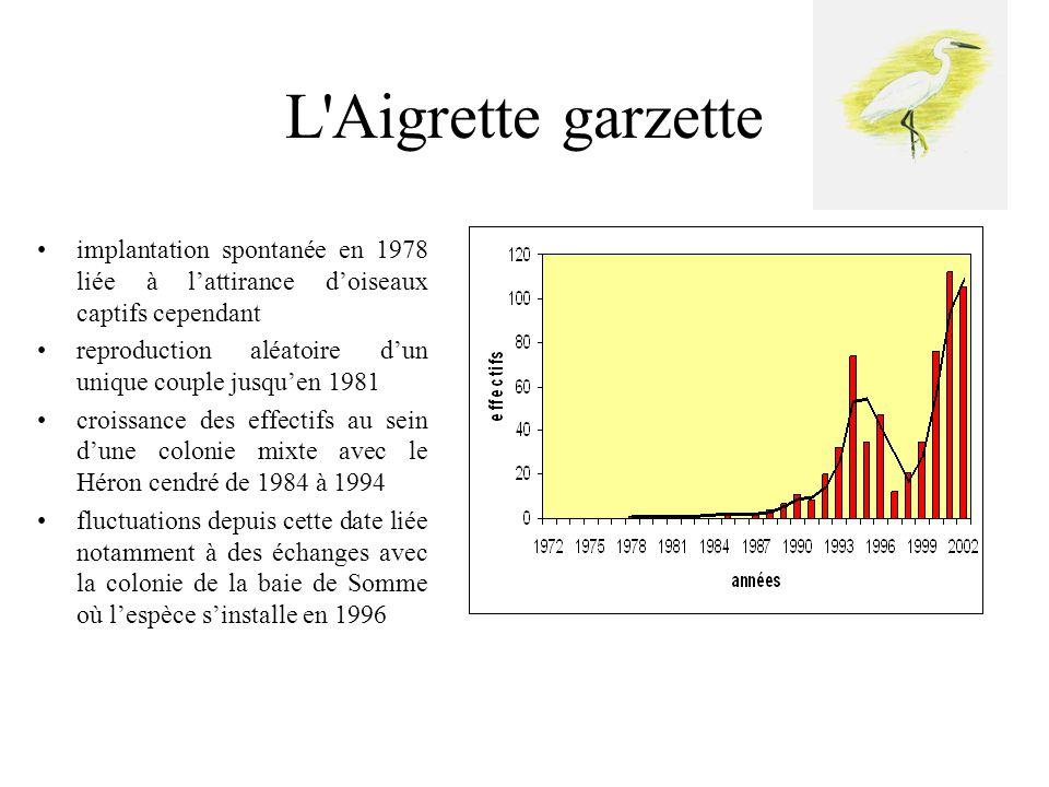 Le Héron garde-bœufs •implantation spontanée en 1992 •croissance de la colonie à partir de 1997