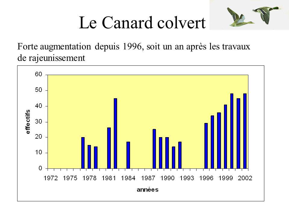 La Spatule blanche •comportements pré-reproducteurs enregistrés dès 1985 •6 couples en 2000 puis 15 l'année suivante et 17 en 2002 (installation dès 1