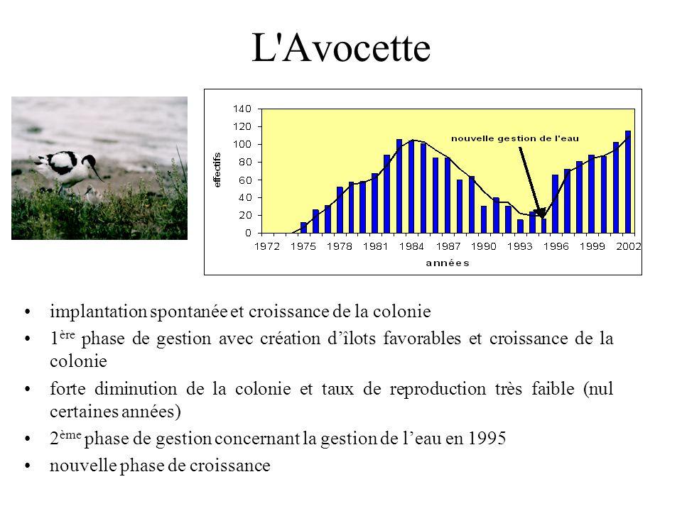 Le Canard colvert Forte augmentation depuis 1996, soit un an après les travaux de rajeunissement