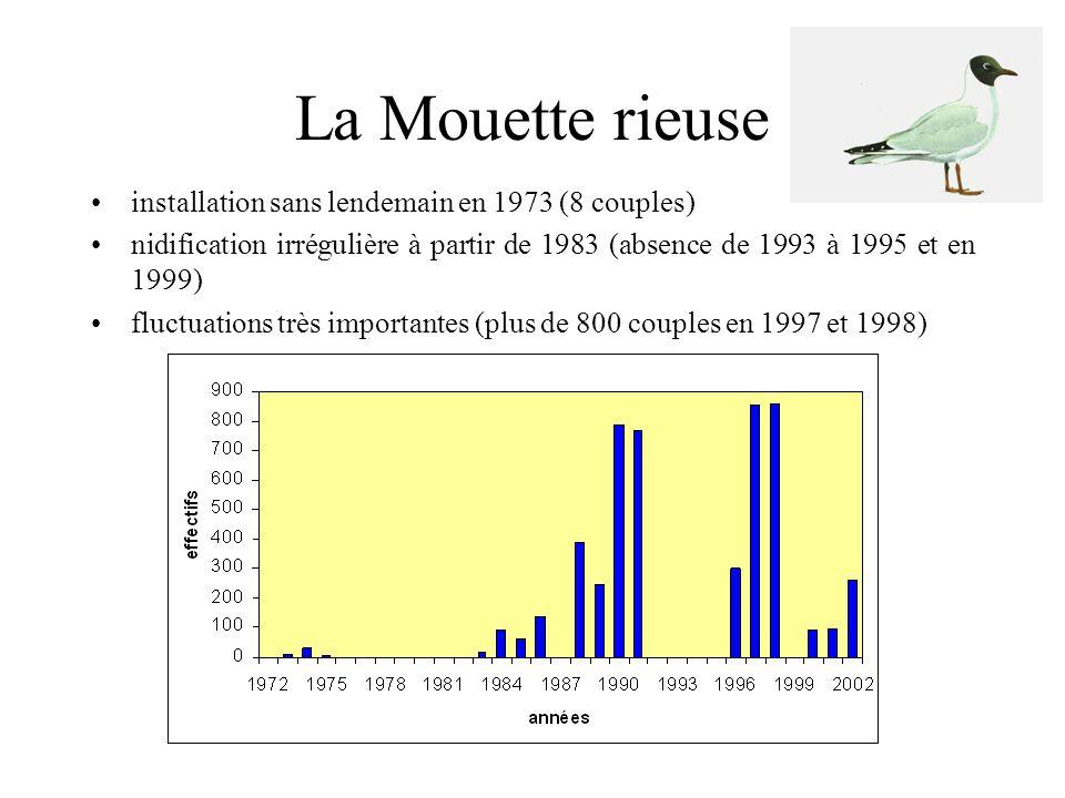 La Mouette mélanocéphale •présence sur la colonie de Mouettes rieuses depuis 1985 •première nidification en 1996 •premier cas de reproduction réussie en 2001 avec 17 couples •29 couples en 2002
