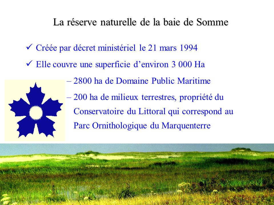 Le Vanneau huppé •Augmentation récente liée à la destruction de la végétation arbustive sur et aux abords des zones prairiales et au pâturage équin