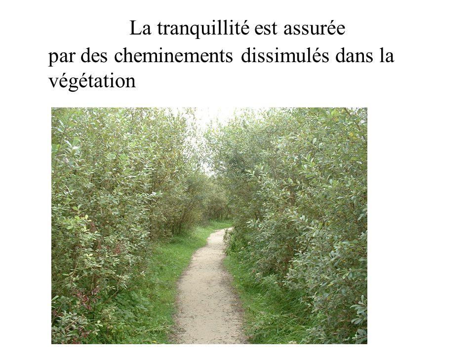 La tranquillité est assurée par des cheminements dissimulés dans la végétation