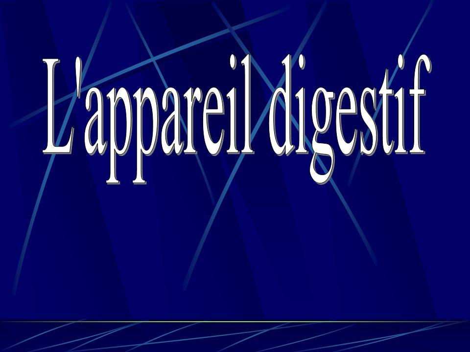 Coupe d'intestin grêle Muqueuse de l'intestin grêle Villosités intestinales
