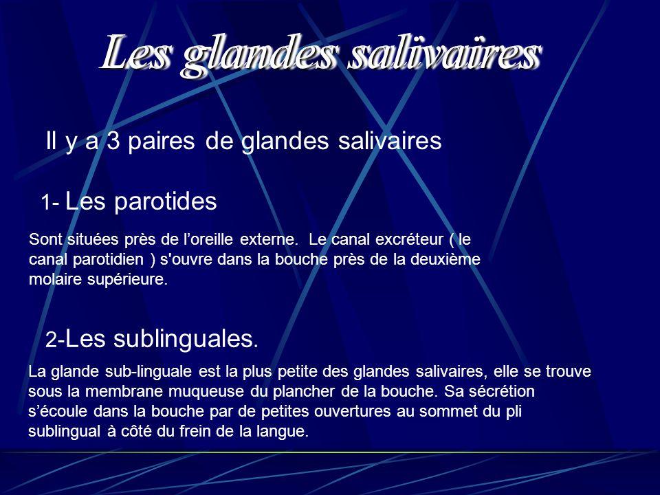 Il y a 3 paires de glandes salivaires 1- Les parotides 2- Les sublinguales. Sont situées près de l'oreille externe. Le canal excréteur ( le canal paro