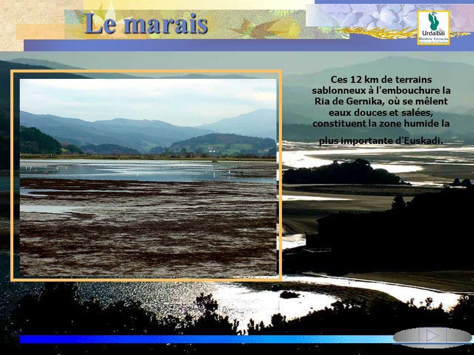 Le réseau hyrographique du rio Oka Plus bas dans l'estuaire, se jetent d'autres cours d'eau plus ou moins importants comme le Baldatika, le Mape ou l'Axpe qui prennent leur source dans le massif du mont Sollube(686m)..