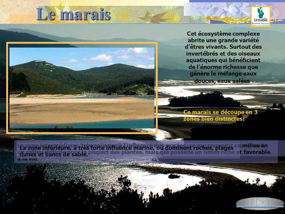 Le marais Le marais Ces 12 km de terrains sablonneux à l embouchure la Ria de Gernika, où se mêlent eaux douces et salées, constituent la zone humide la plus importante d Euskadi.