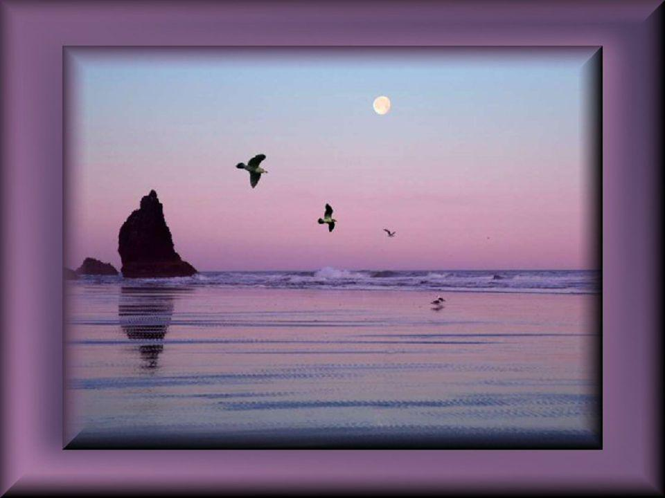 Vous que la Vie a rendu si Fragile… Votre esprit triomphe telle une Colombe qui file… Entendez cette voix amicale au lointain… Elle vous dictera un éc