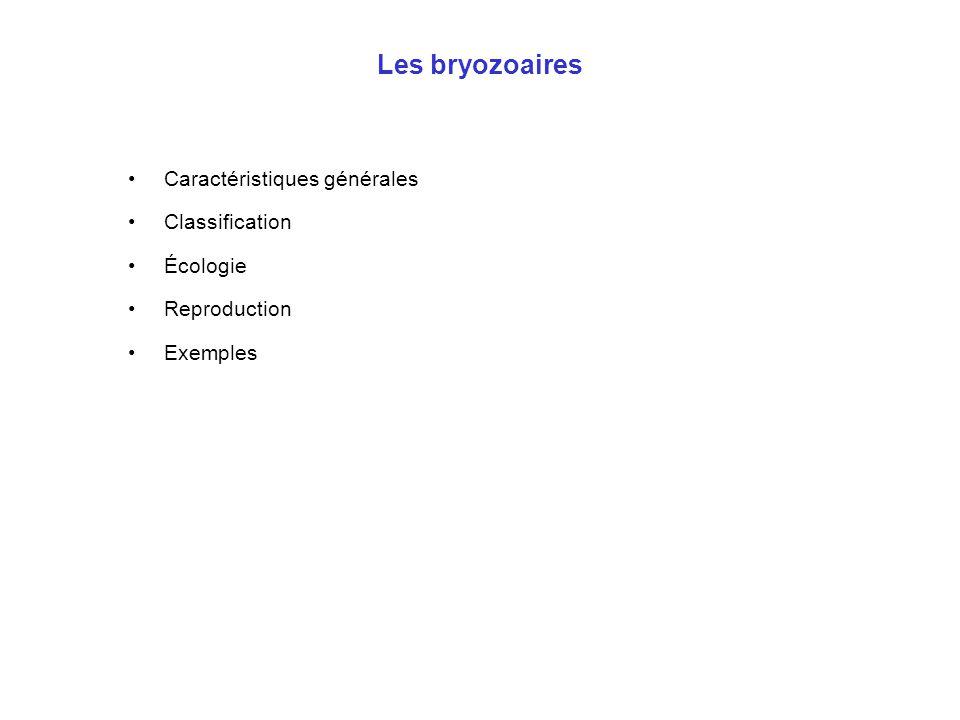 Les bryozoaires •Caractéristiques générales •Classification •Écologie •Reproduction •Exemples
