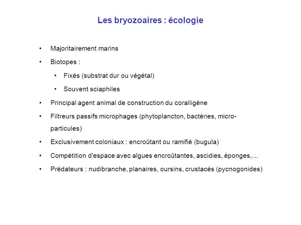 Les bryozoaires : écologie •Majoritairement marins •Biotopes : •Fixés (substrat dur ou végétal) •Souvent sciaphiles •Principal agent animal de constru