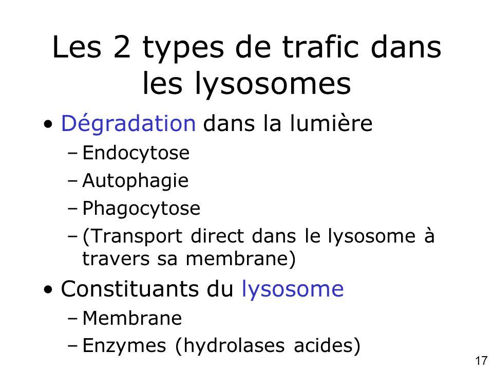 17 Les 2 types de trafic dans les lysosomes •Dégradation dans la lumière –Endocytose –Autophagie –Phagocytose –(Transport direct dans le lysosome à travers sa membrane) •Constituants du lysosome –Membrane –Enzymes (hydrolases acides)
