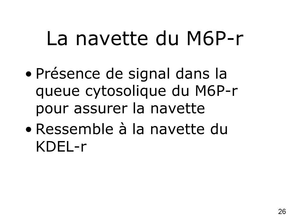 26 La navette du M6P-r •Présence de signal dans la queue cytosolique du M6P-r pour assurer la navette •Ressemble à la navette du KDEL-r