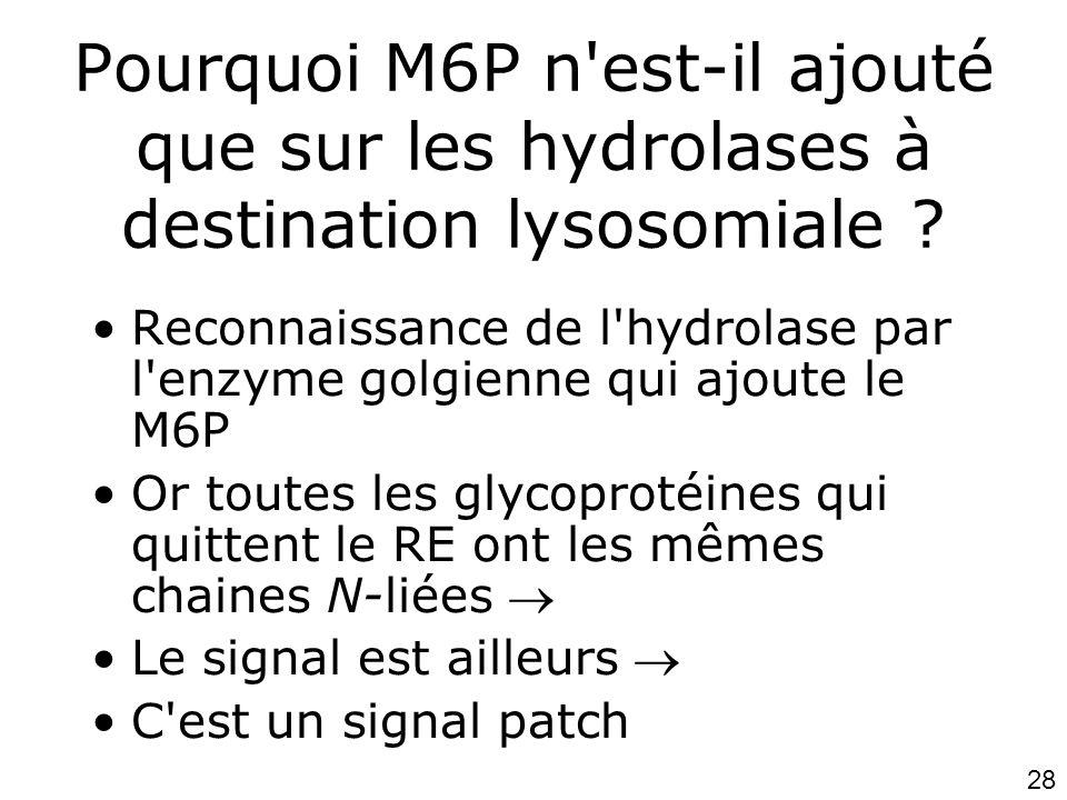 28 Pourquoi M6P n'est-il ajouté que sur les hydrolases à destination lysosomiale ? •Reconnaissance de l'hydrolase par l'enzyme golgienne qui ajoute le