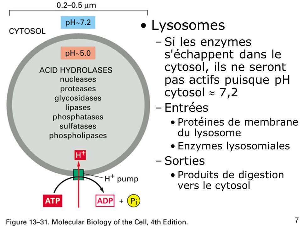 7 Fig 13-31 •Lysosomes –Si les enzymes s échappent dans le cytosol, ils ne seront pas actifs puisque pH cytosol  7,2 –Entrées •Protéines de membrane du lysosome •Enzymes lysosomiales –Sorties •Produits de digestion vers le cytosol
