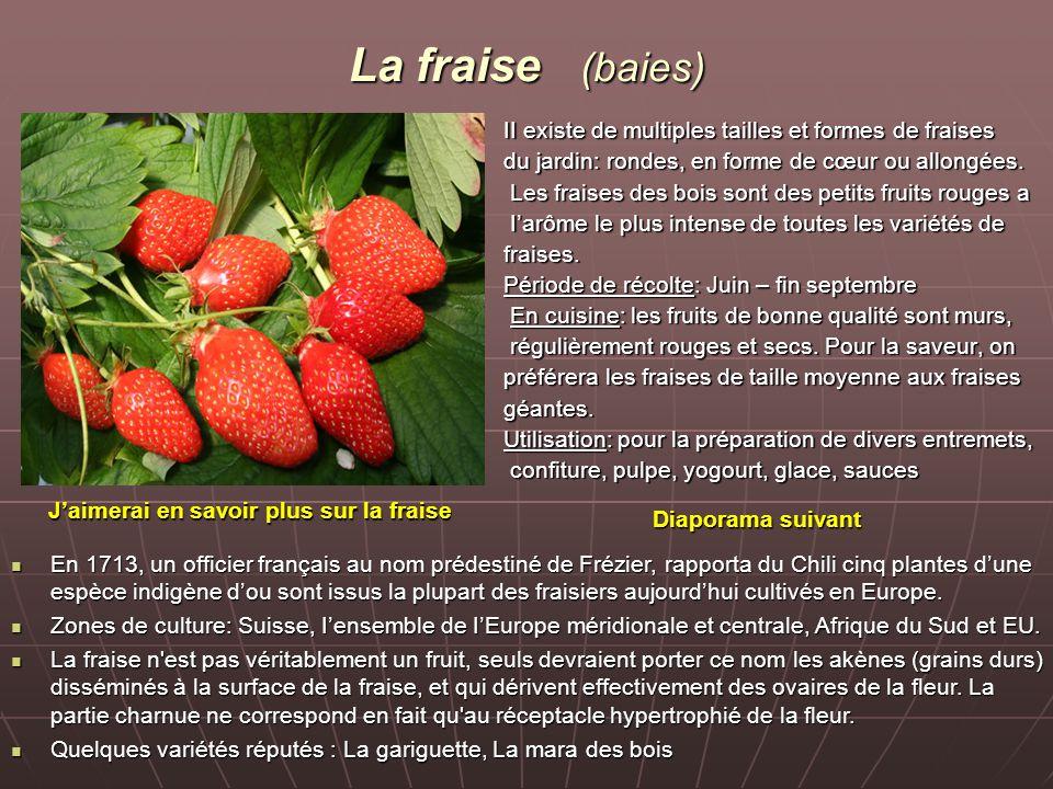 La fraise (baies) II existe de multiples tailles et formes de fraises du jardin: rondes, en forme de cœur ou allongées. Les fraises des bois sont des