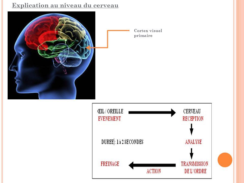 Explication au niveau du cerveau Cortex visuel primaire