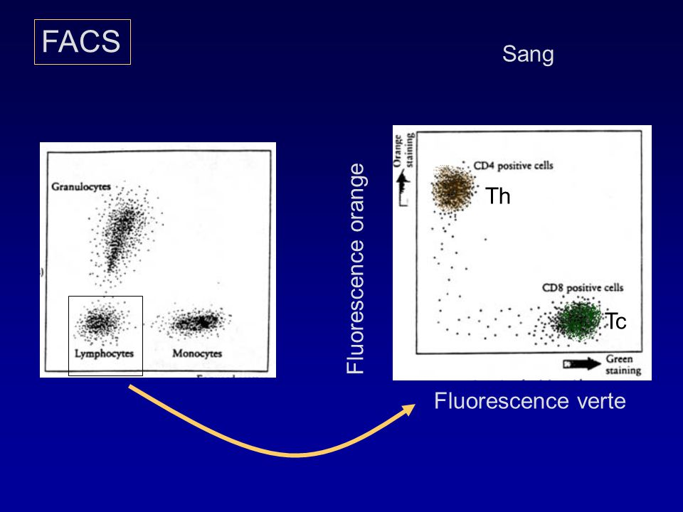 Th Tc FACS Sang Fluorescence verte Fluorescence orange