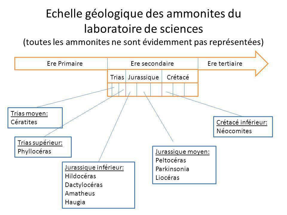 Echelle géologique des ammonites du laboratoire de sciences (toutes les ammonites ne sont évidemment pas représentées) Ere PrimaireEre secondaireEre t