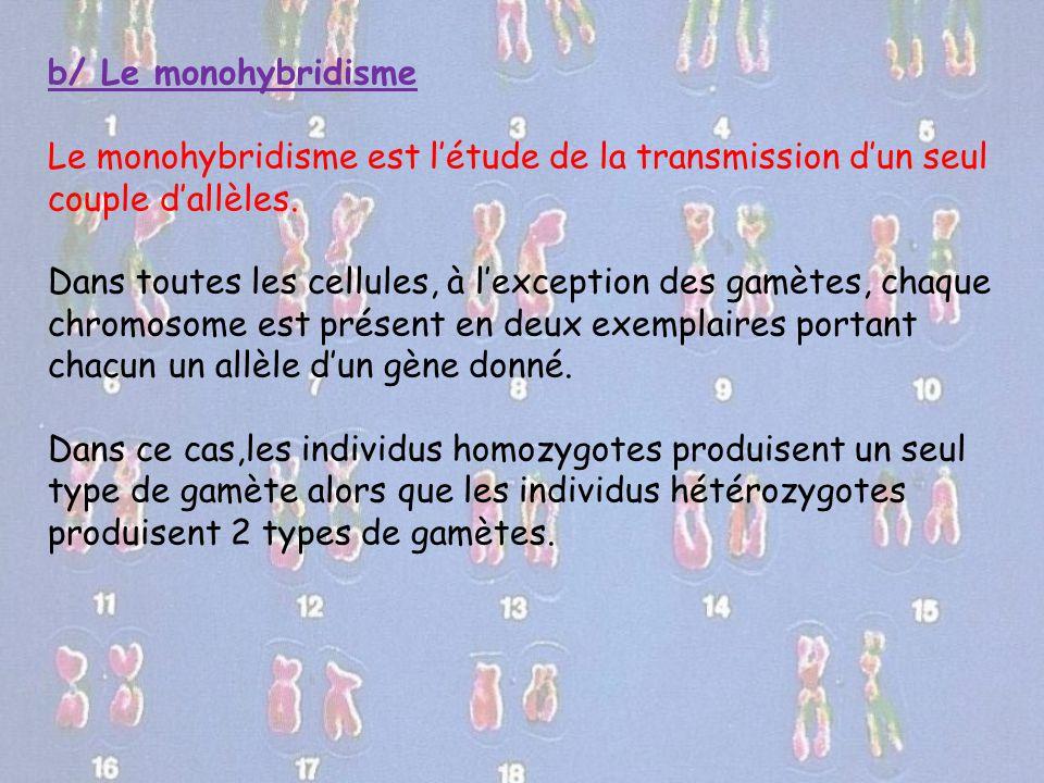b/ Le monohybridisme Le monohybridisme est l'étude de la transmission d'un seul couple d'allèles. Dans toutes les cellules, à l'exception des gamètes,