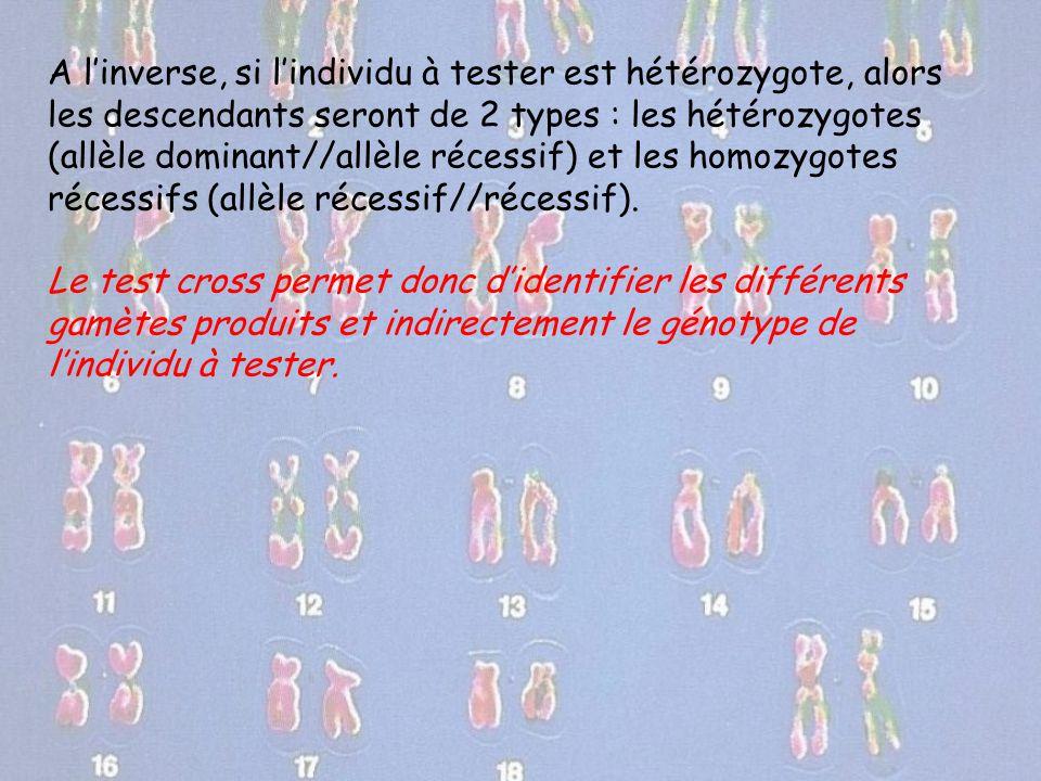 A l'inverse, si l'individu à tester est hétérozygote, alors les descendants seront de 2 types : les hétérozygotes (allèle dominant//allèle récessif) e