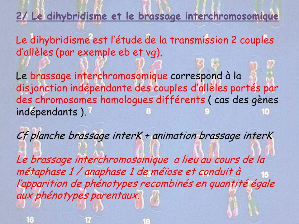 2/ Le dihybridisme et le brassage interchromosomique Le dihybridisme est l'étude de la transmission 2 couples d'allèles (par exemple eb et vg). Le bra