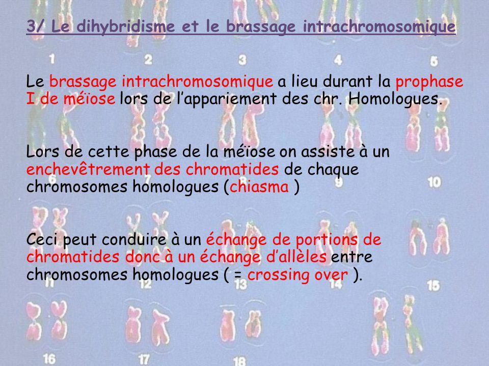 3/ Le dihybridisme et le brassage intrachromosomique Le brassage intrachromosomique a lieu durant la prophase I de méïose lors de l'appariement des ch