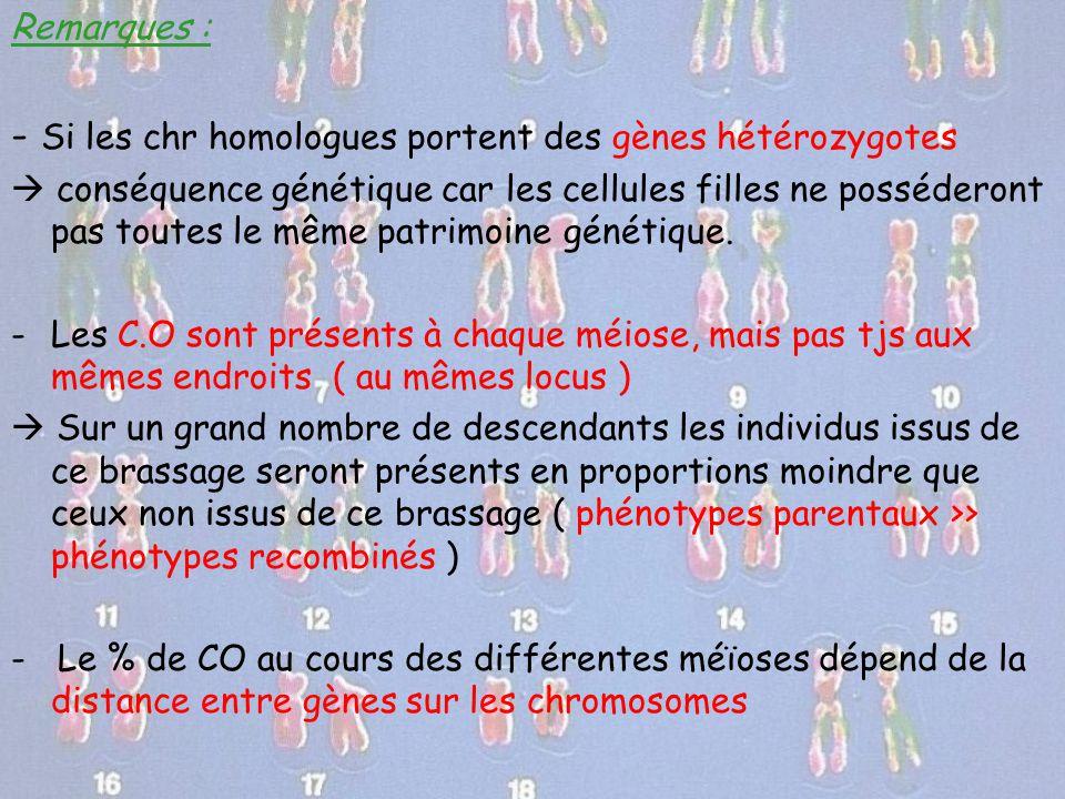 Remarques : - Si les chr homologues portent des gènes hétérozygotes  conséquence génétique car les cellules filles ne posséderont pas toutes le même