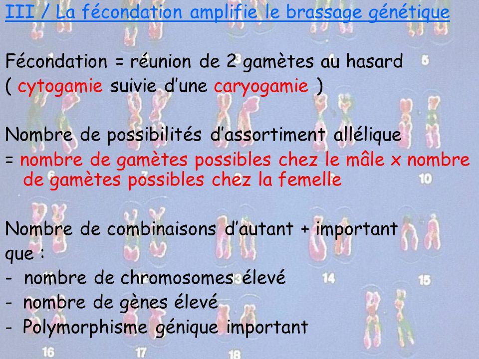 III / La fécondation amplifie le brassage génétique Fécondation = réunion de 2 gamètes au hasard ( cytogamie suivie d'une caryogamie ) Nombre de possi