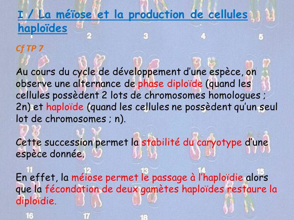 I / La méïose et la production de cellules haploïdes Cf TP 7 Au cours du cycle de développement d'une espèce, on observe une alternance de phase diplo