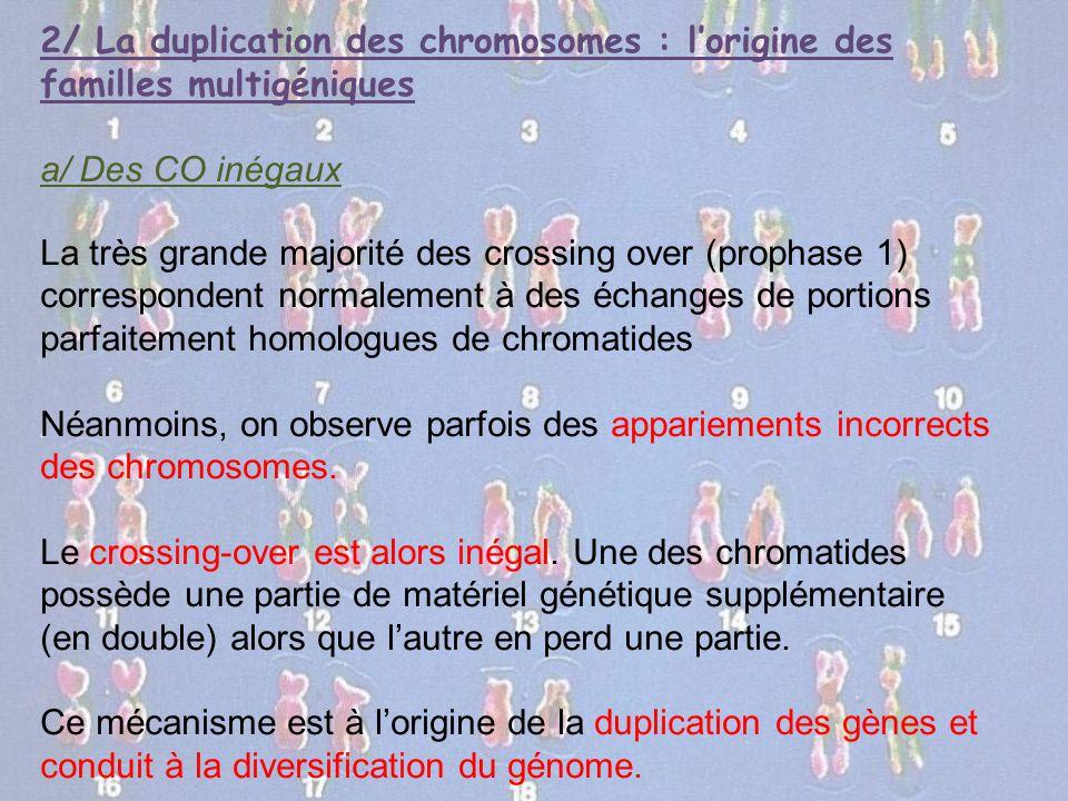2/ La duplication des chromosomes : l'origine des familles multigéniques a/ Des CO inégaux La très grande majorité des crossing over (prophase 1) corr