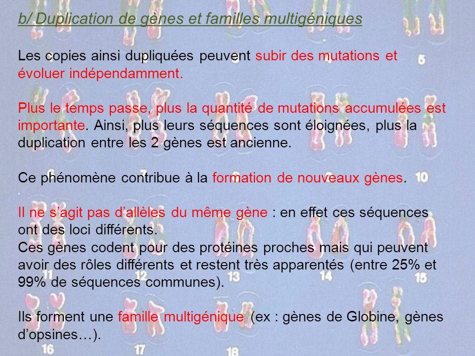 b/ Duplication de gènes et familles multigéniques Les copies ainsi dupliquées peuvent subir des mutations et évoluer indépendamment. Plus le temps pas