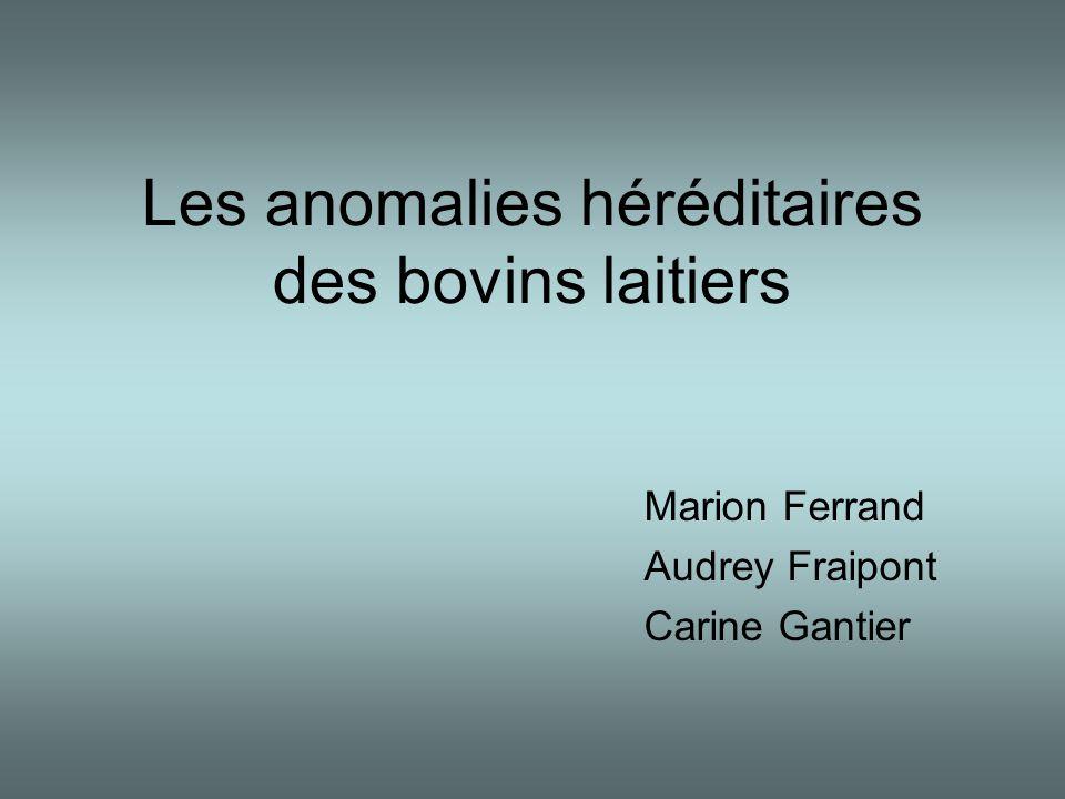 Les anomalies héréditaires des bovins laitiers Marion Ferrand Audrey Fraipont Carine Gantier