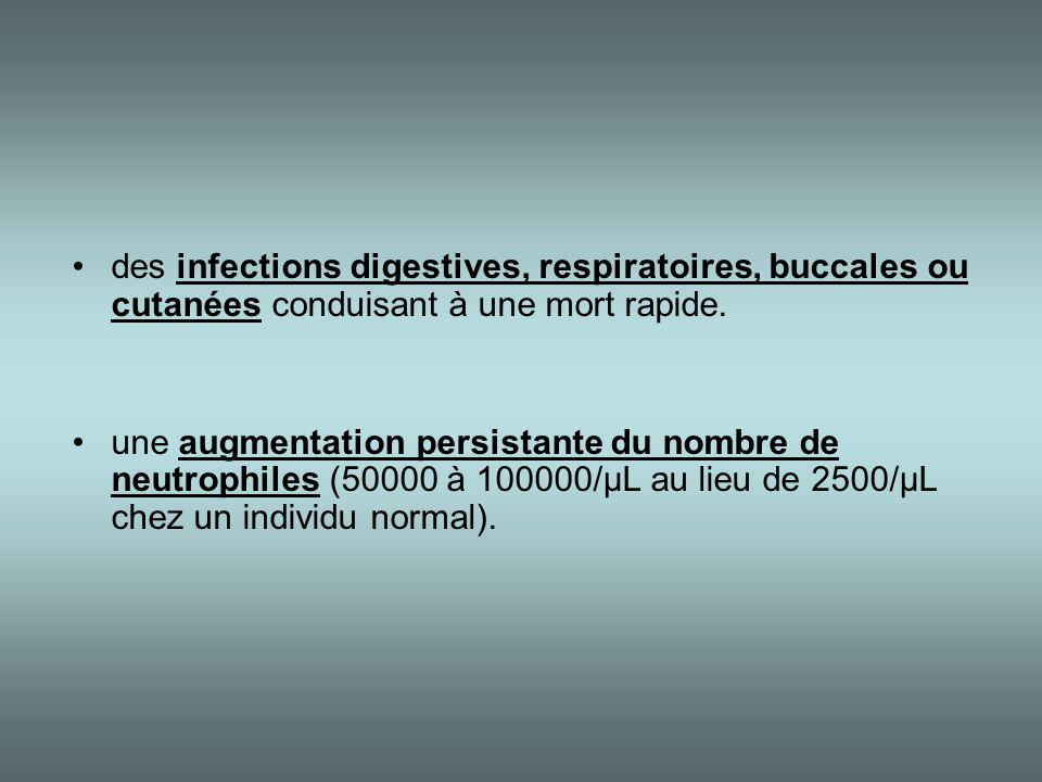 •des infections digestives, respiratoires, buccales ou cutanées conduisant à une mort rapide. •une augmentation persistante du nombre de neutrophiles