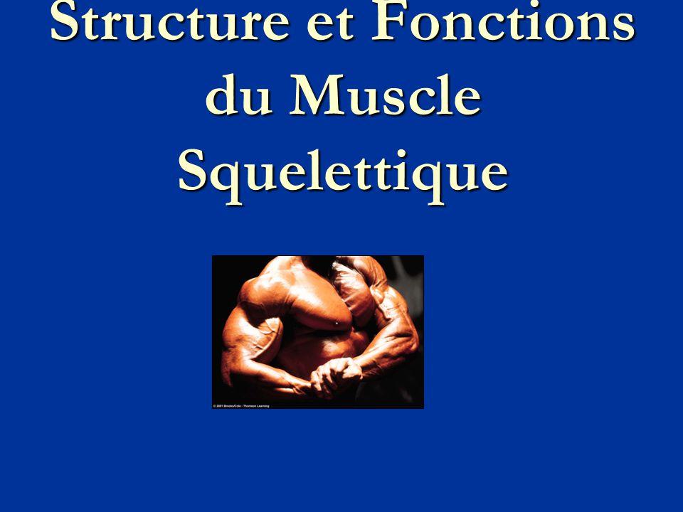 I - Caractéristiques générales du tissu musculaire A - Types de tissus musculaires  3 types : squelettique, cardiaque, lisse.