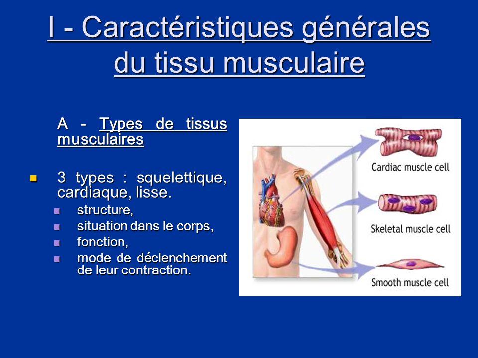 I - Caractéristiques générales du tissu musculaire A - Types de tissus musculaires  3 types : squelettique, cardiaque, lisse.  structure,  situatio