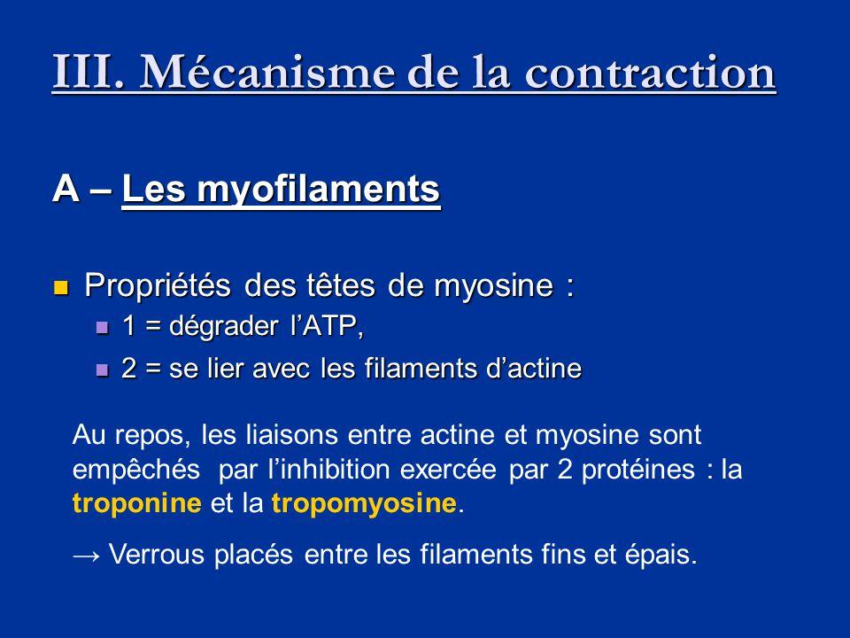III. Mécanisme de la contraction A – Les myofilaments  Propriétés des têtes de myosine :  1 = dégrader l'ATP,  2 = se lier avec les filaments d'act