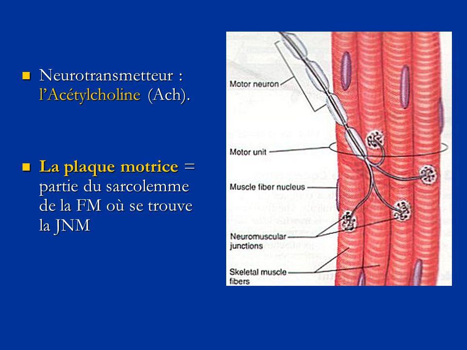  Neurotransmetteur : l'Acétylcholine (Ach).  La plaque motrice = partie du sarcolemme de la FM où se trouve la JNM